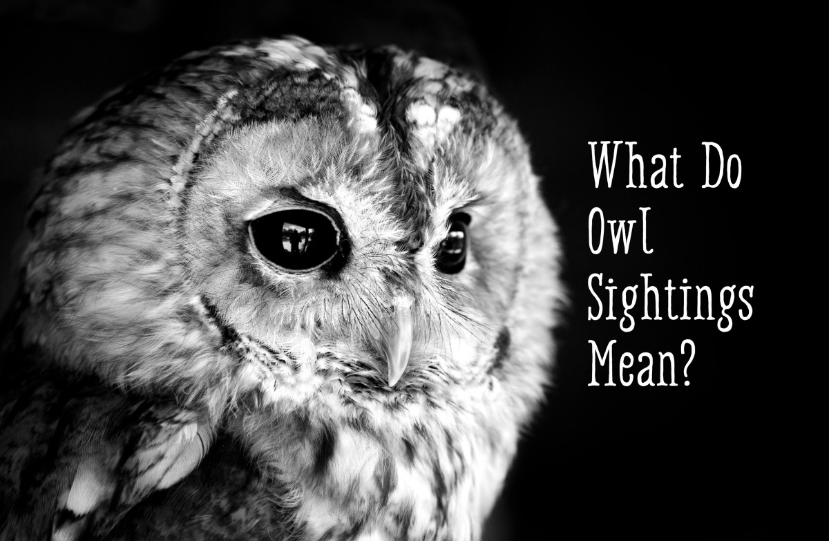 Owl Symbolismwhat Does It Mean When You See An Owl Exemplore