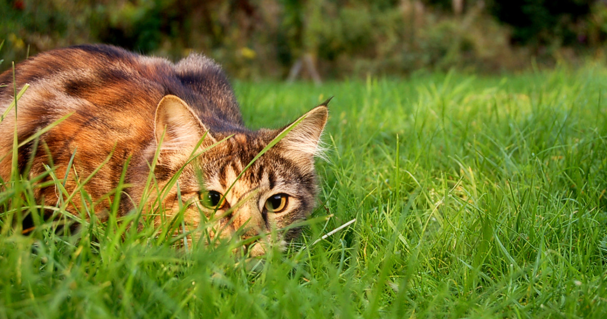 Pet Insurance for Cats: How Much Do I Have to Pay