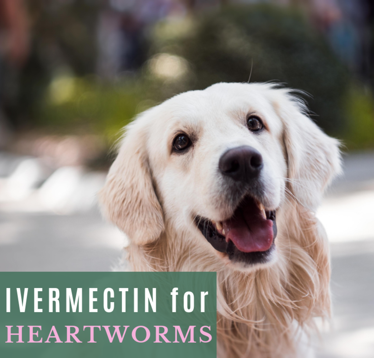 If your dog's heartworms are caught early, ivermectin can be the safest treatment.