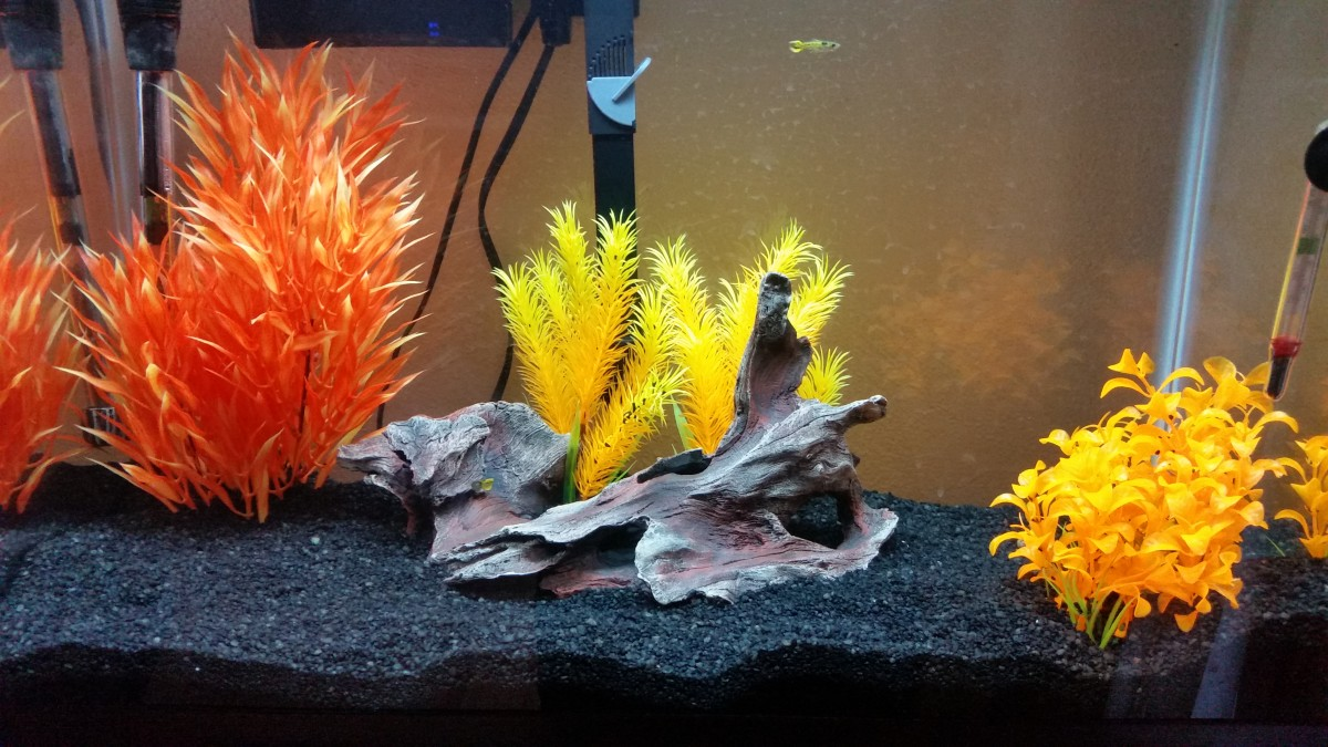 How to Start a Freshwater Fish Tank