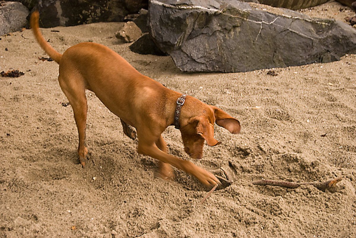 How to Train Your Dog to Stop Digging