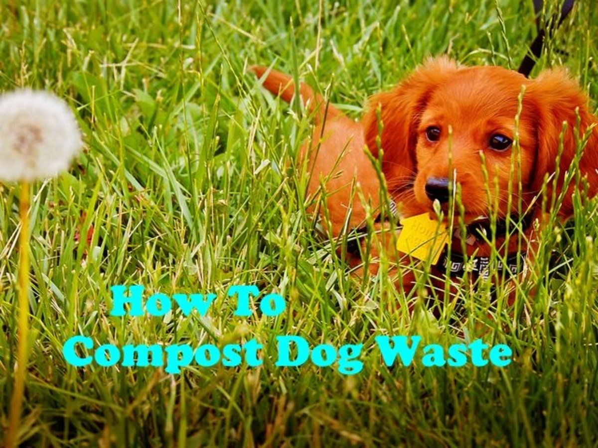How to compost your dogs waste.