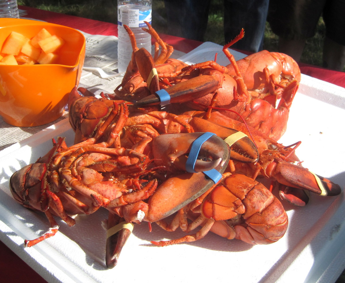 How to Host a Live Lobster Party: Cooking and Prep Tips
