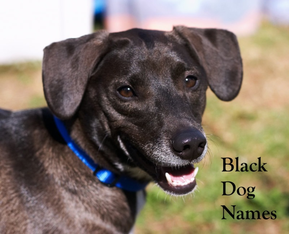 Your black dog will be a great companion to you, so he deserves a fitting name.