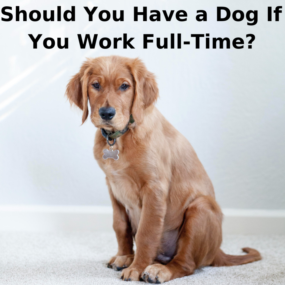 Is It Right to Have a Dog If You Work Full-Time?