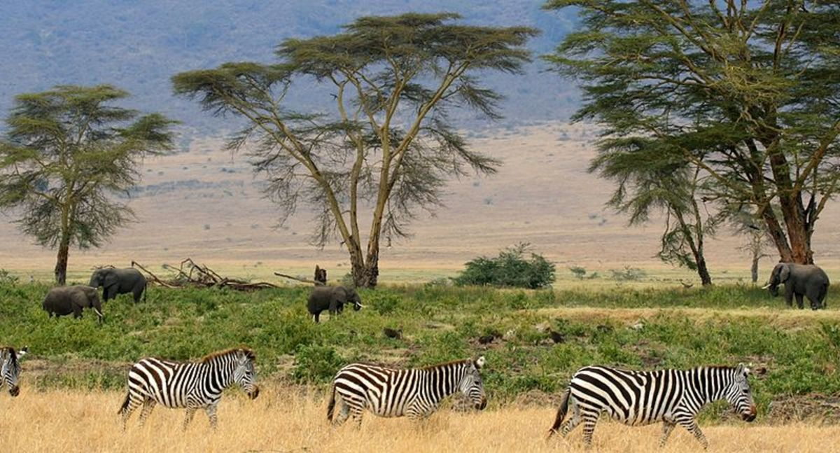 The African Megafauna