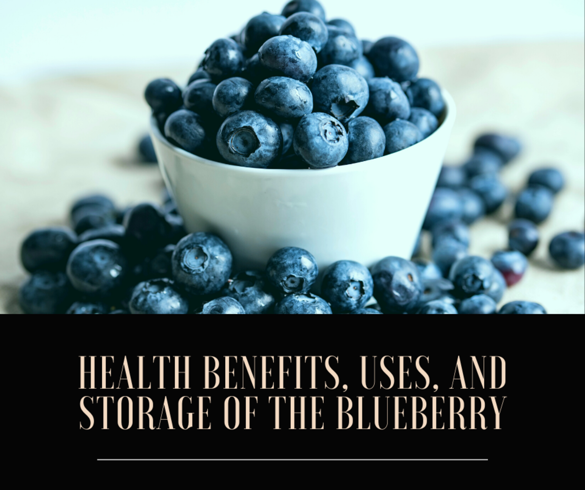 Health Benefits, Uses, and Storage of the Blueberry