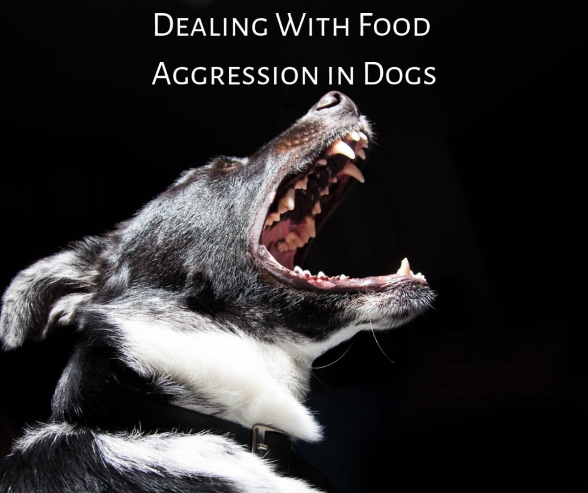 Learn how to deal with food aggression in dogs.