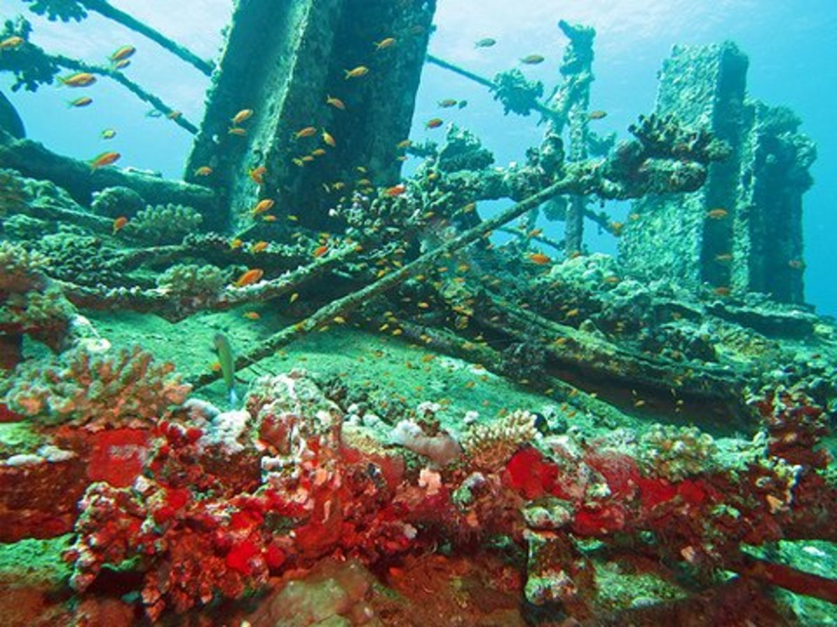 Shipwreck Diving in the Red Sea, Jeddah