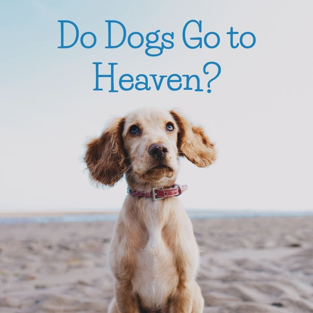 A Christian perspective on where pets go when they die