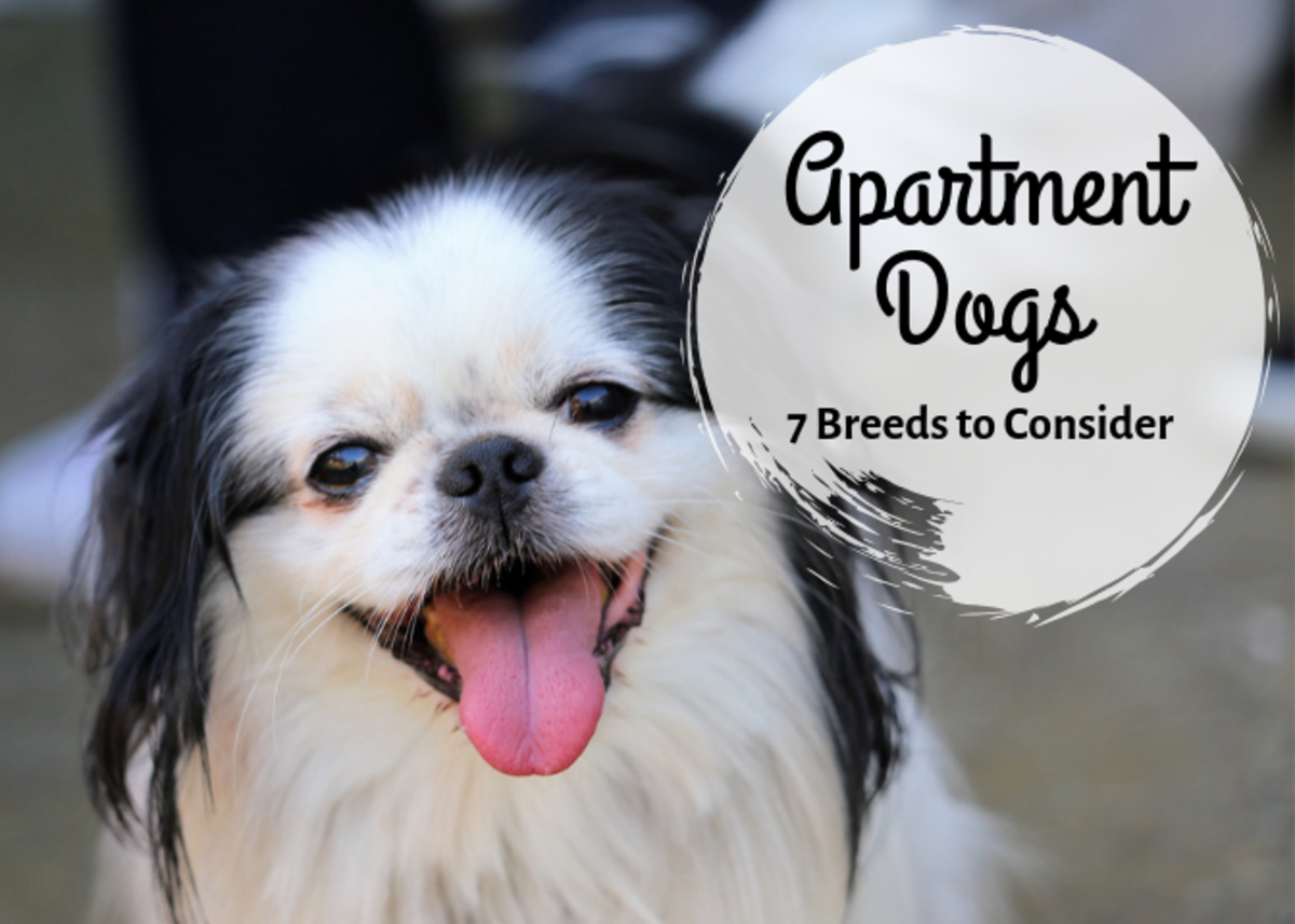 If you live in an apartment and want a dog, try one of these seven great small breeds.