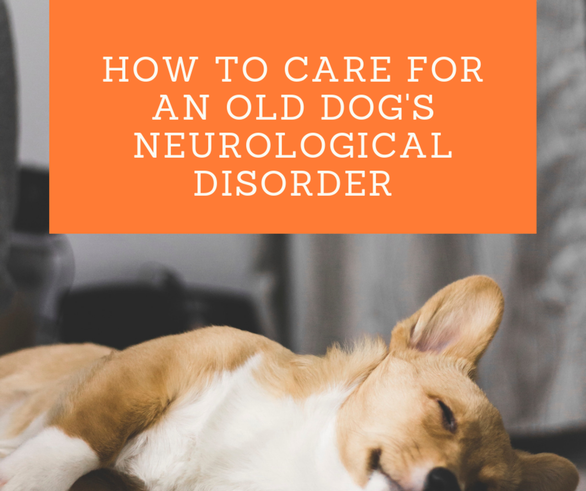 How to Take Care of  a Senior Dog With a Neurological Disorder