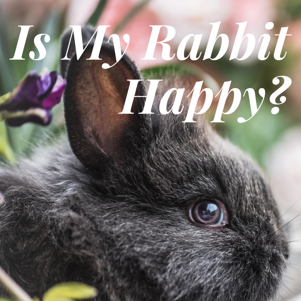 How to Tell If Your Rabbit Is Happy