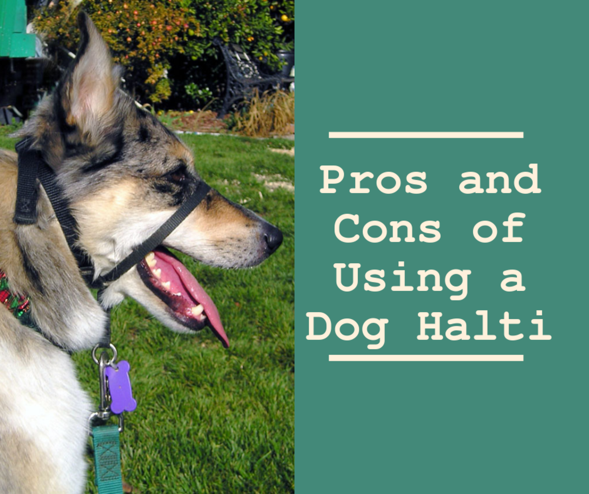 The halter-style collar controls the dog's head but does not restrict its ability to pant, drink, or grasp objects.
