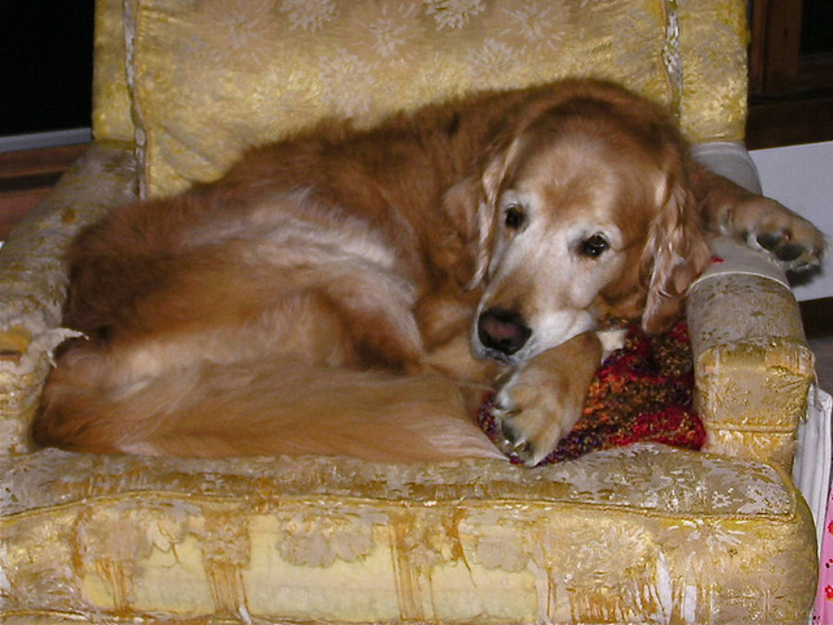 Natural Cancer Alternative Treatments for Your Dog