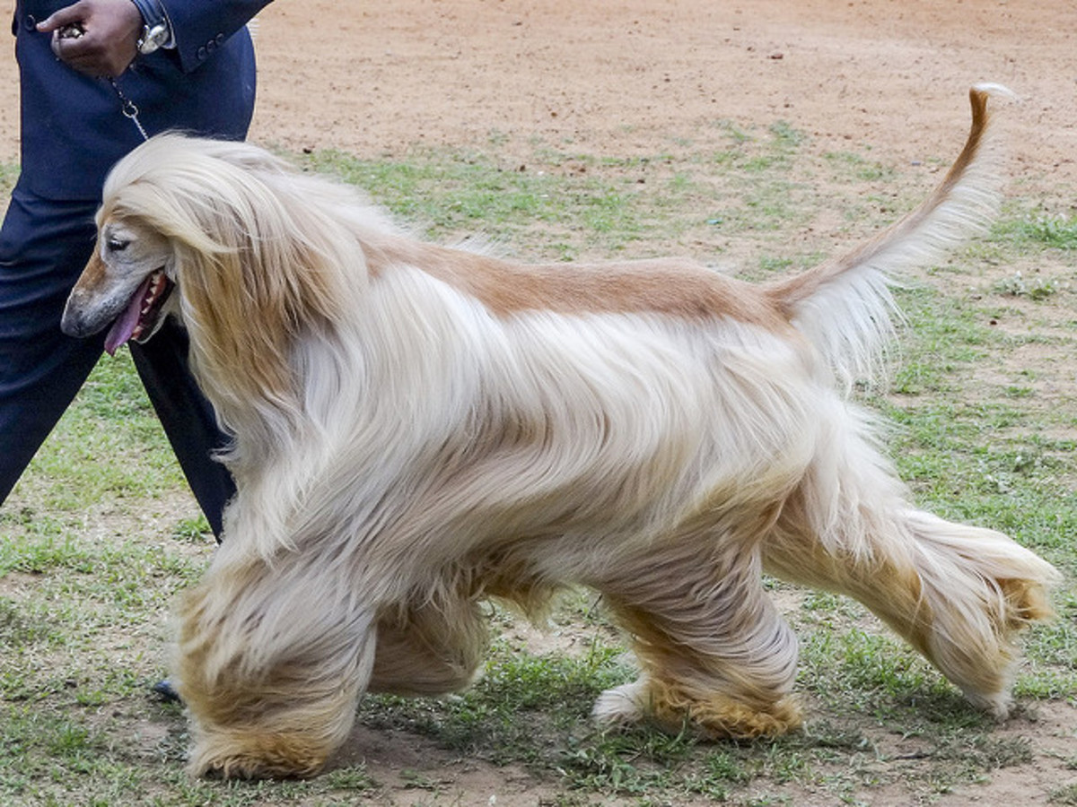 5 Dog Breeds You Should Not Own (No, Not Another Dangerous Dogs List)