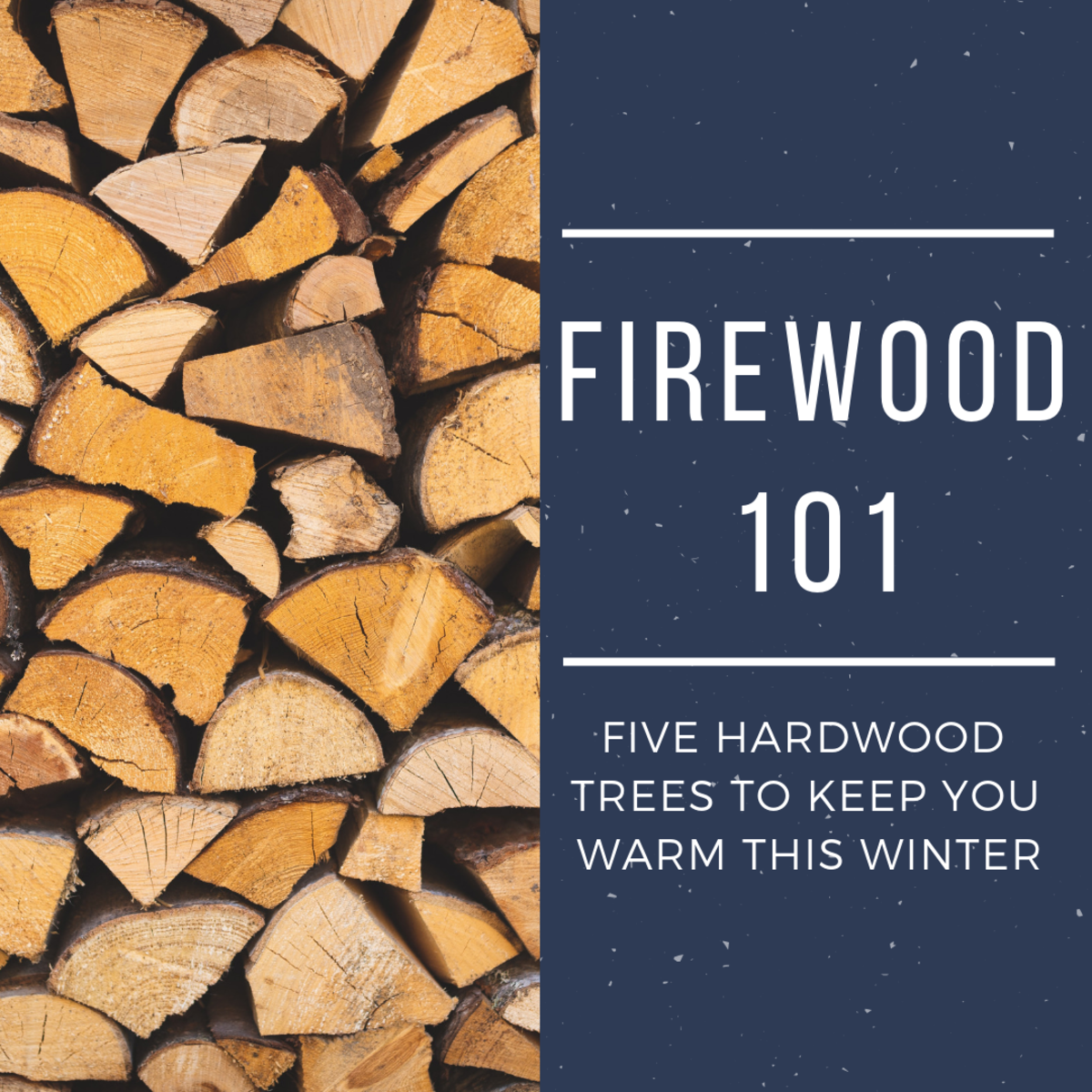 What kind of firewood is best for you, and why?
