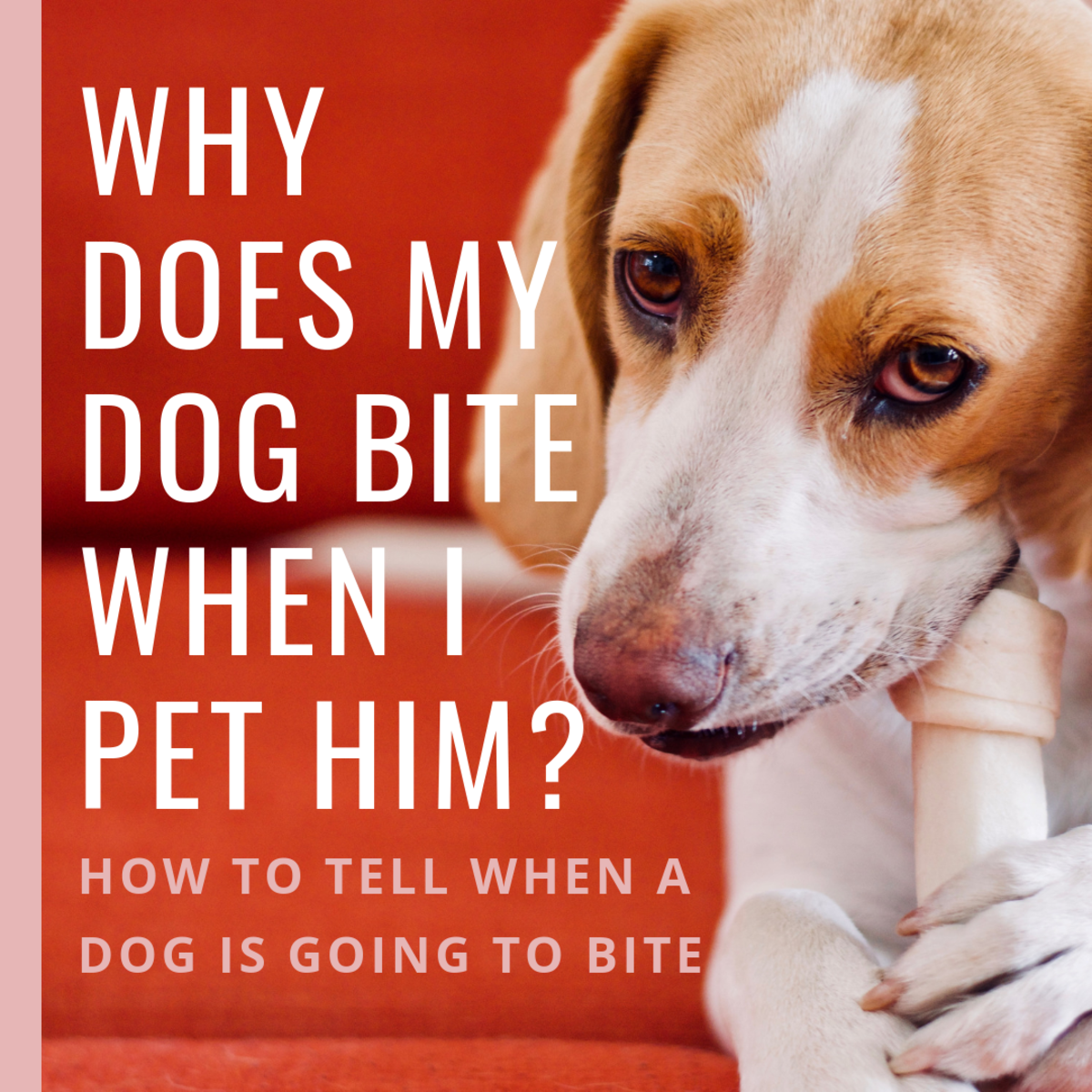 Why Do Dogs Bite When You Pet Them? (Signs a Dog Is Going to Bite)