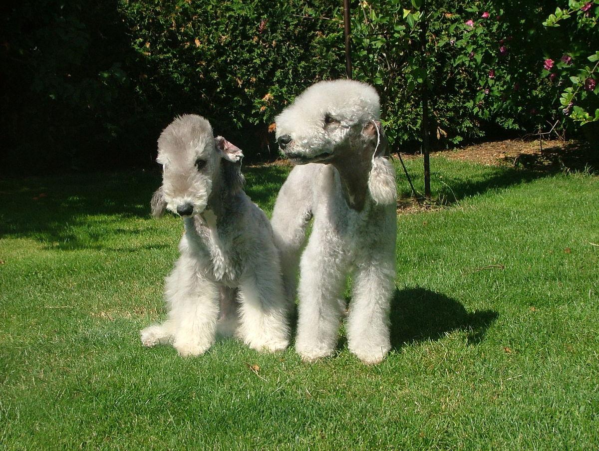 7 of the World's Weirdest-Looking Dog Breeds