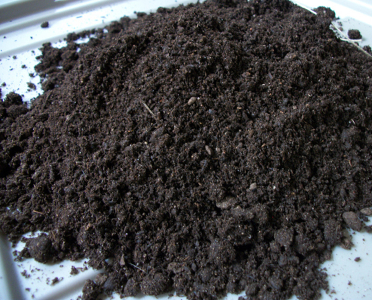 Quality compost by CompTea. Rich, dark and fully alive!
