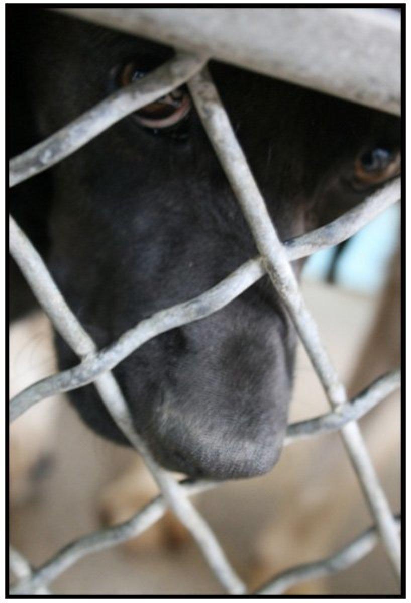 dog-shelters-chihuahuas-and-labrador-retrievers