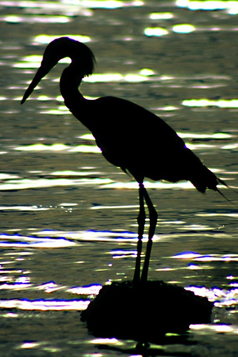 An egret, silhouetted against the setting sun, rests peacefully on a shoreline rock