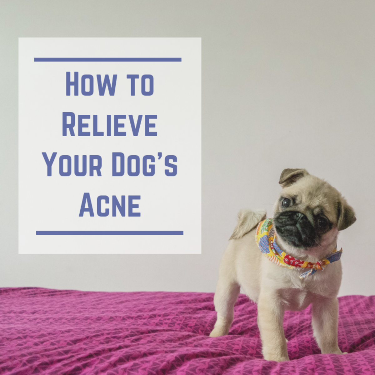 Natural ways to soothe canine acne.