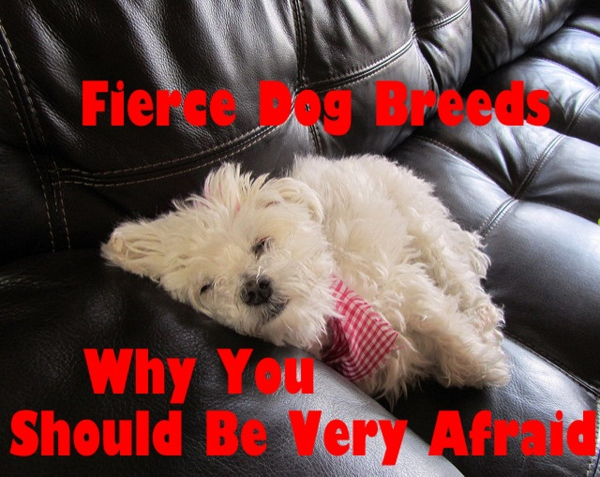 Firece dog breeds that you should be afraid of.