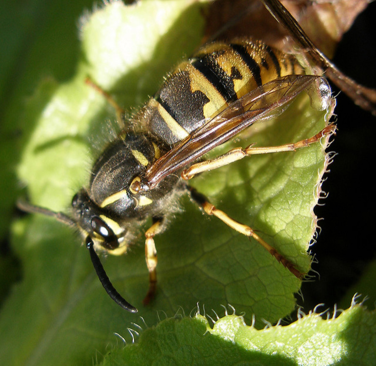 Getting Rid of Wasps