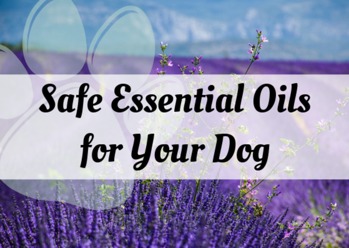 Discover some aromatherapy essential oils that are safe for your dog (though keep in mind that you'll want to consult a holistic vet about using them).