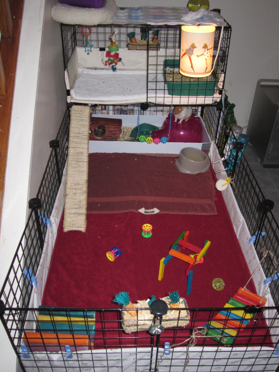This is the cage that we used to potty train the guinea pigs.