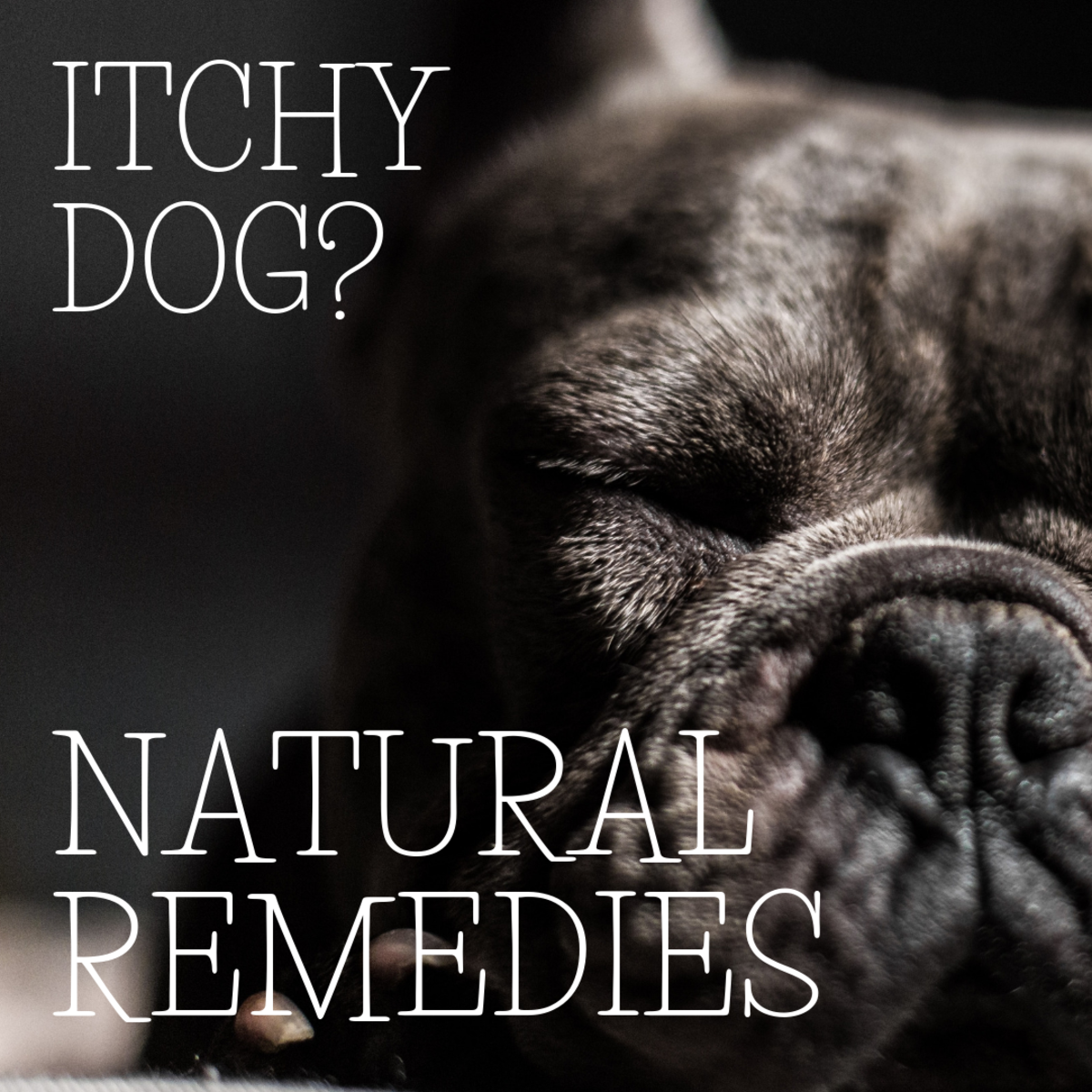 Natural Remedies for Itchy Skin in Dogs