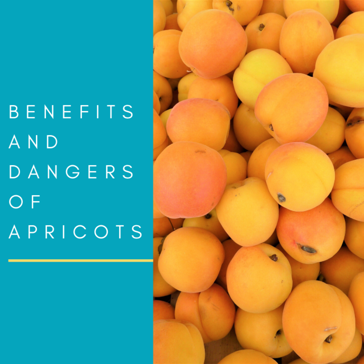 Are apricots good for you? Read on to learn about the potential dangers and benefits of this fruit.