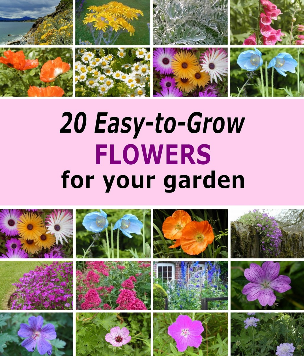 20 Easy-to-Grow Flowers for Garden Planters and Flower Beds!