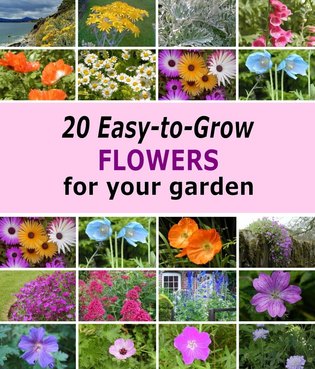 20 Easy To Grow Flowers For Garden Colour Dengarden