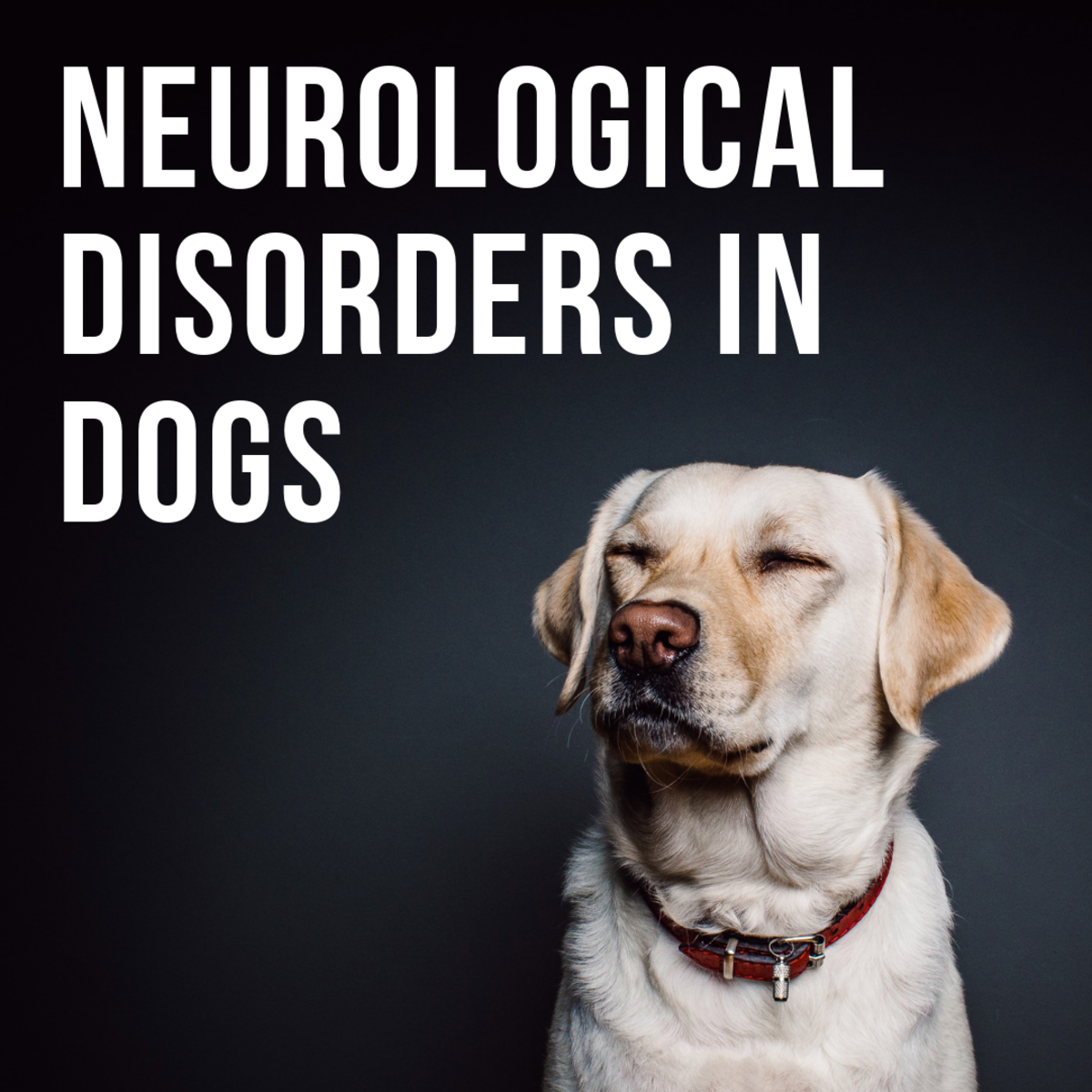 Warning Signs of Neurological Disorders in Canines | PetHelpful
