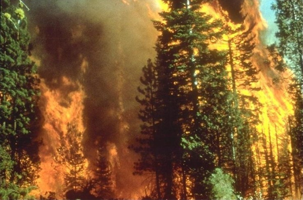 How to Decrease Forest Wildfire Risk in and Near Your House and Structures