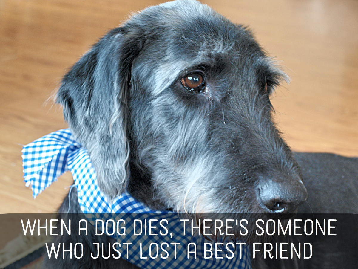 Pet Sympathy Messages: Condolences for Loss of Dogs, Cats ...