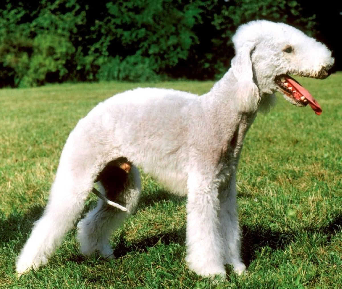 The Top 10 Ugliest Dog Breeds in the World