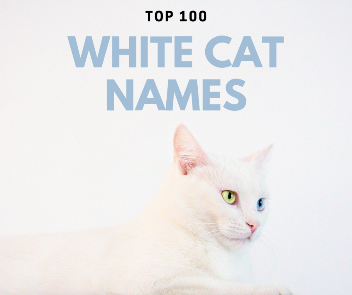 Top 100 White Cat Names
