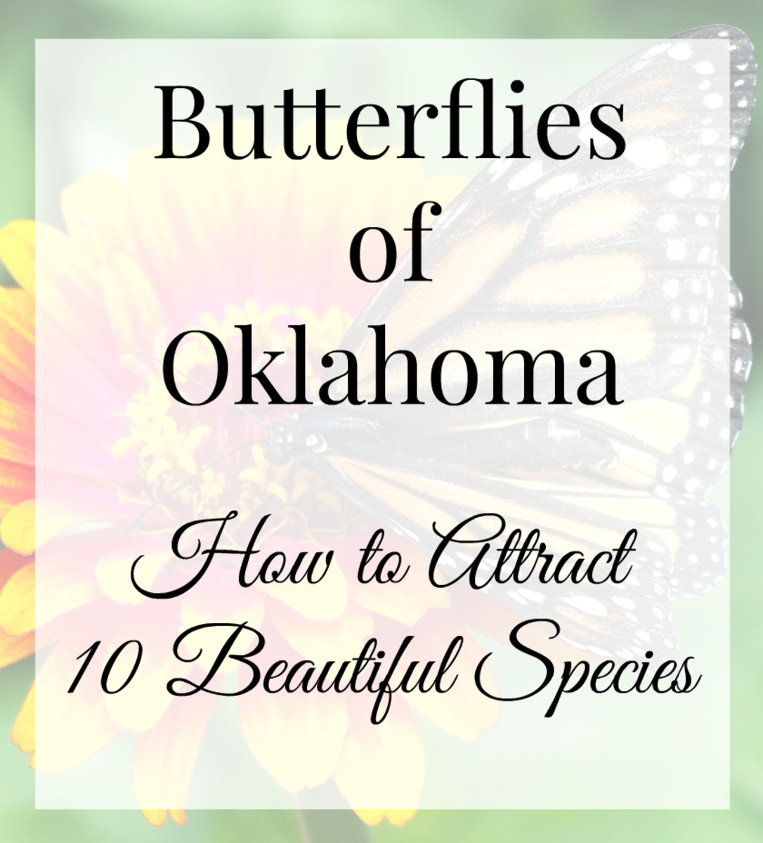 Butterflies of Oklahoma:  Ten Beautiful Species and How To Attract Them