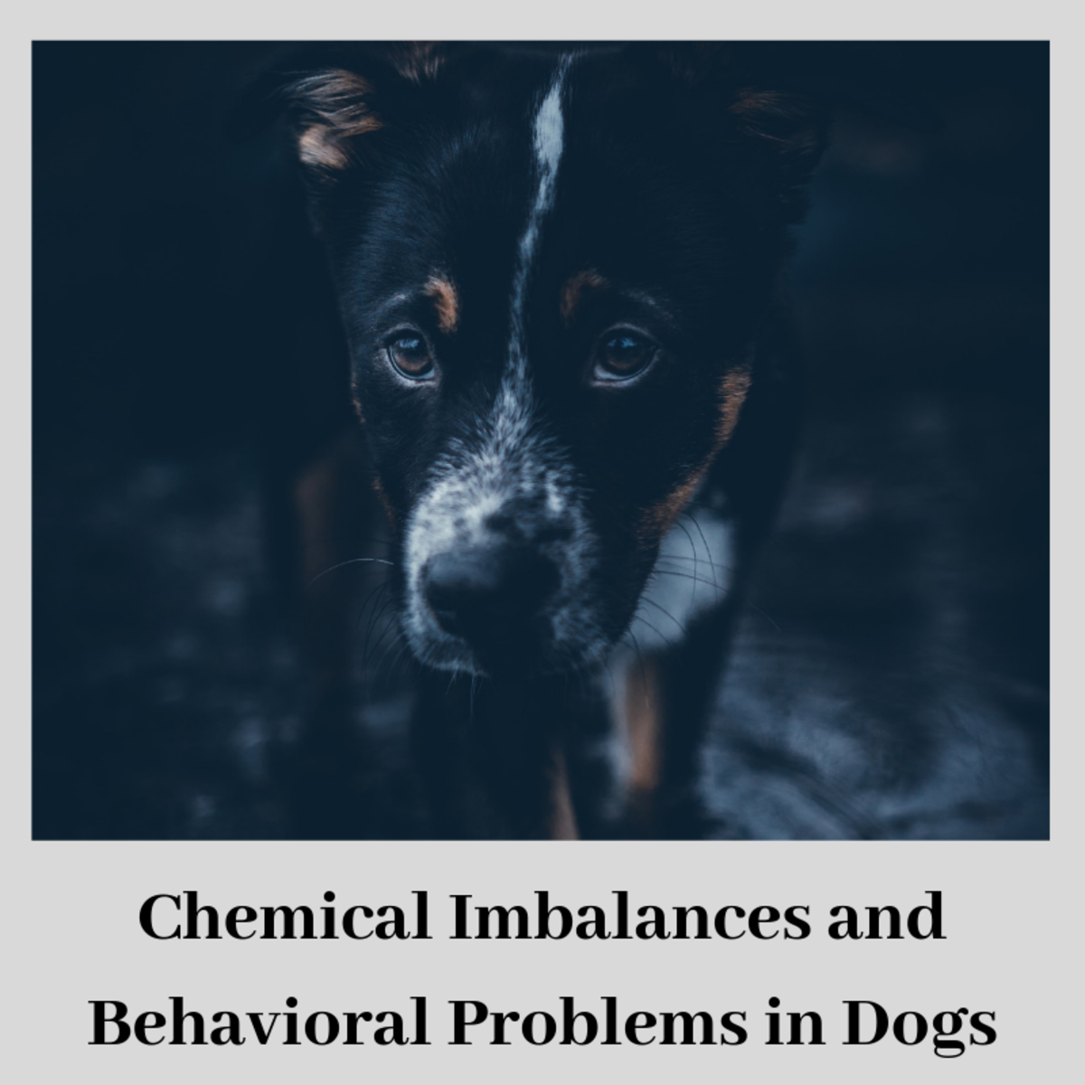 Dog Brain Chemistry and the Use of Medications and Behavior Modification