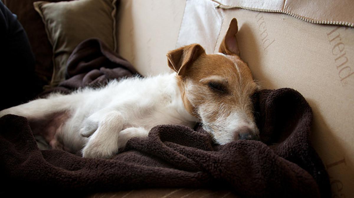 Rimadyl Side Effects in Dog Arthritis