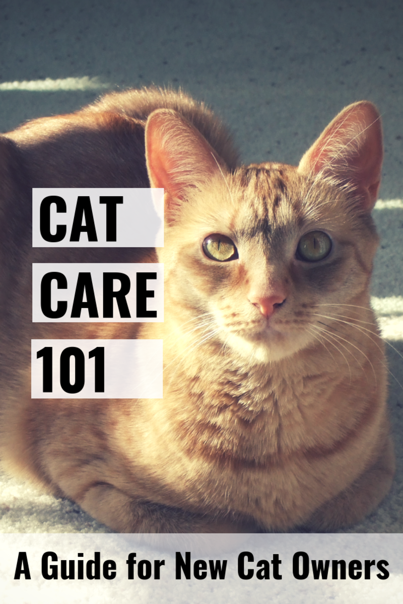 Cat Care 101 covers all the basics you'll need to know about caring for your cat.