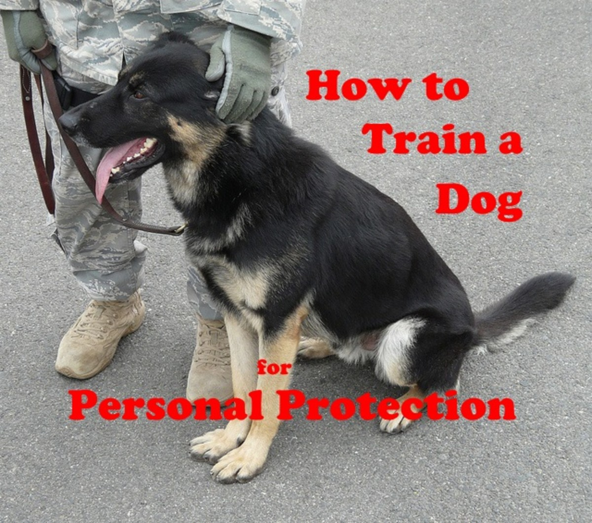 How to train your dog for personal protection.