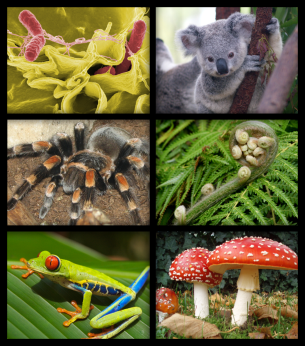 Biology is the study of living things, their composition and their interactions.