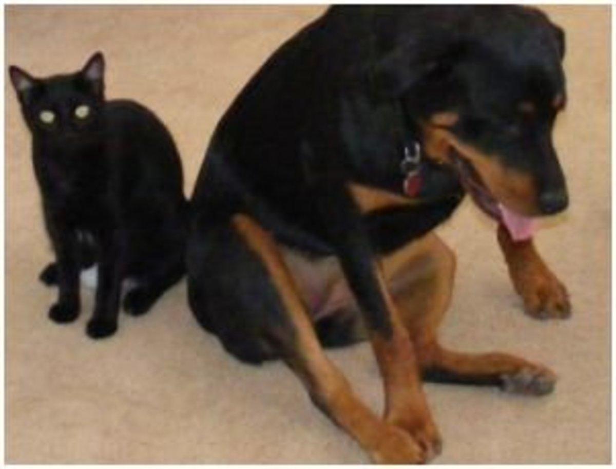 Dog eats cat poop risks