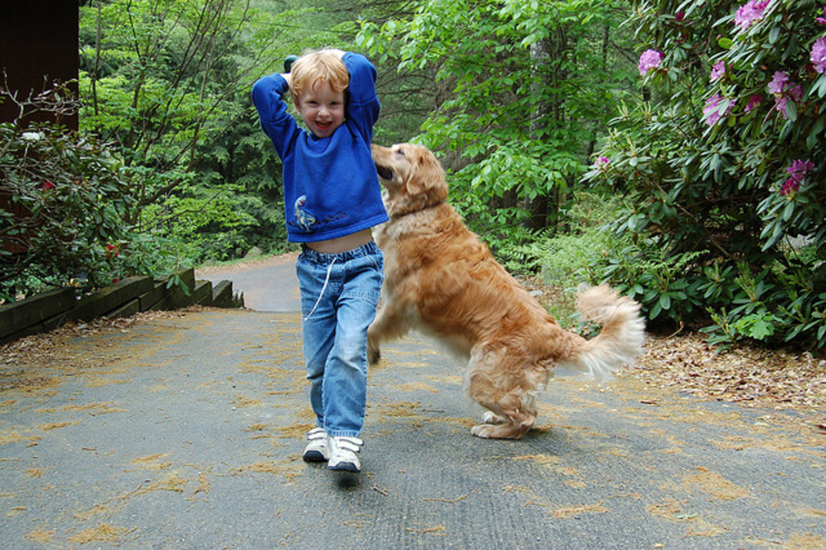 Golden Retrievers love to play with kids.