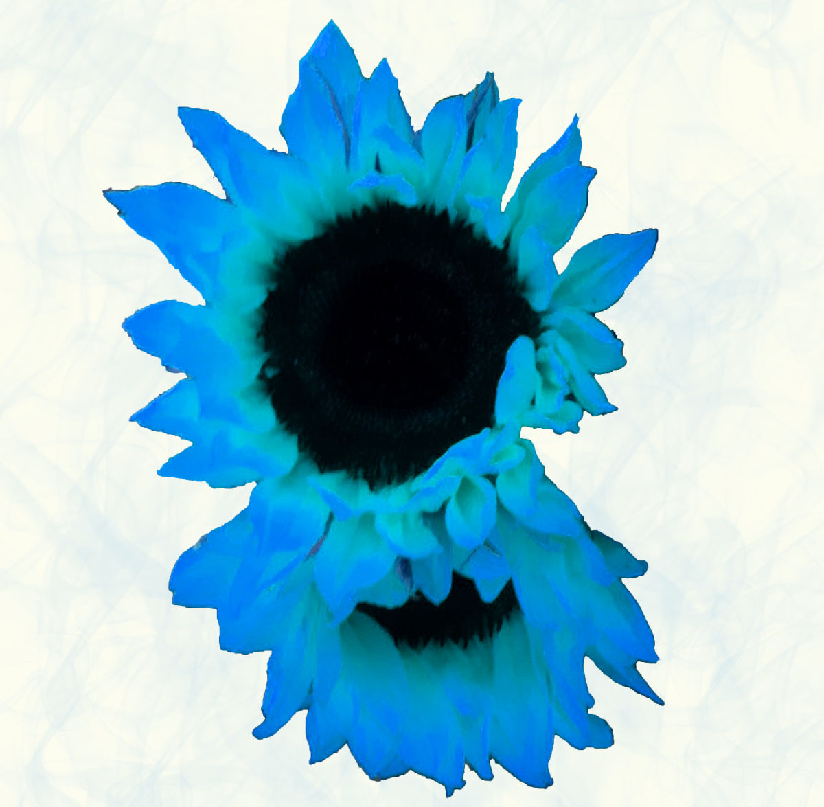 Blue sunflowers that I offered in my Zazzle store.