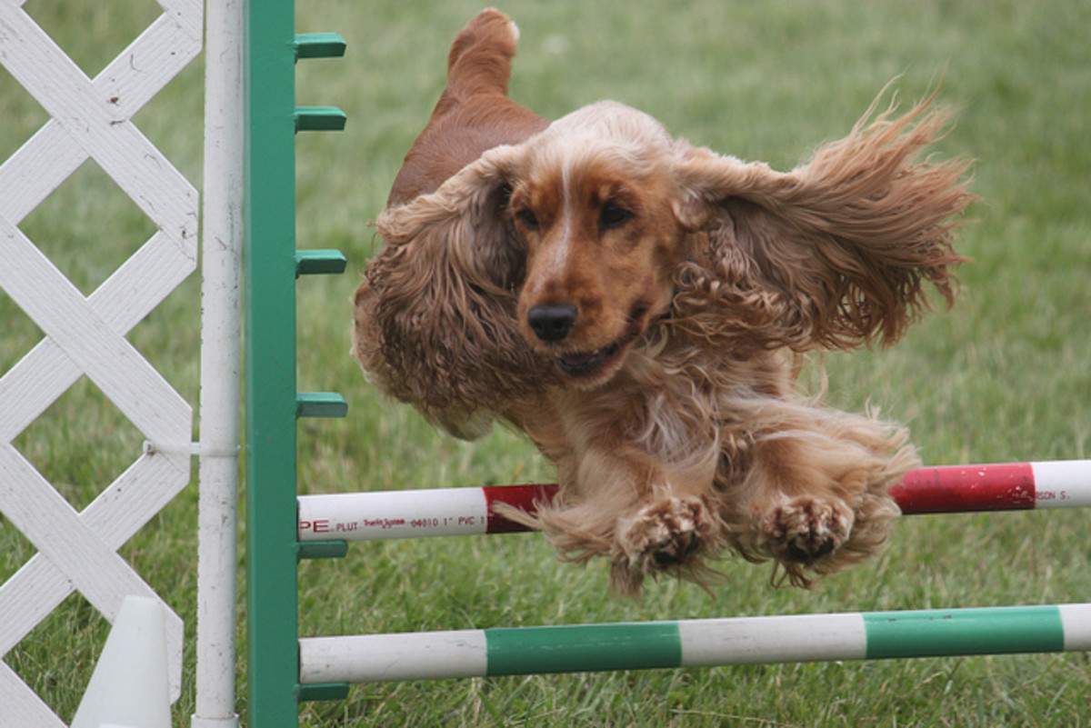Your dog should stay heartworm free and able to do everything!